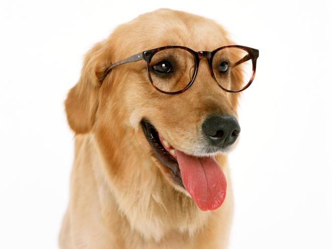 dog_student_1600x1200